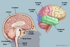neuromusculairemanipulaties